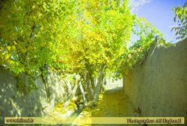تصویر پاییز زیبای بیلند عکاس: علی ازقندی